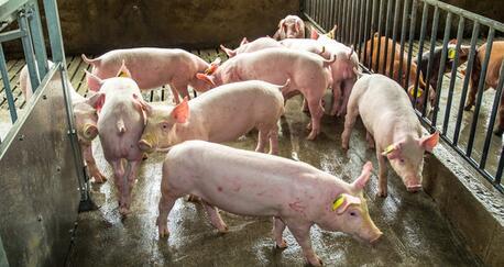 猪价将跌破7元,成本却在暴涨!但后市仍有戏……