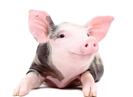 2017年10月19日(20至30公斤)仔猪价格行情走势