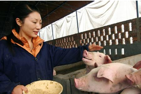 养猪利润从低谷到突破10元……您看好中国养猪业的发展吗?