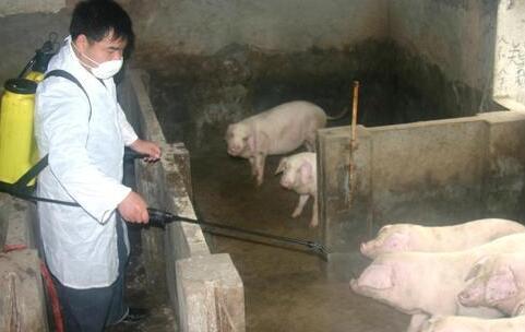秋季生猪常见疾病的分析及防治措施之猪口蹄疫病!