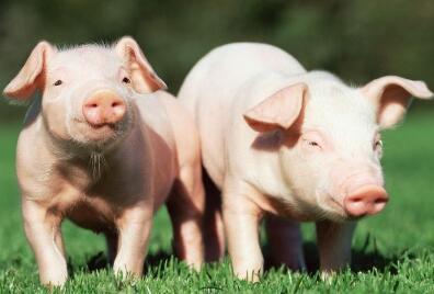 2017年10月20日(20至30公斤)仔猪价格行情走势