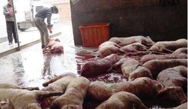 湖南省浏阳市首次追责养殖户,买卖病猪的一审均获刑