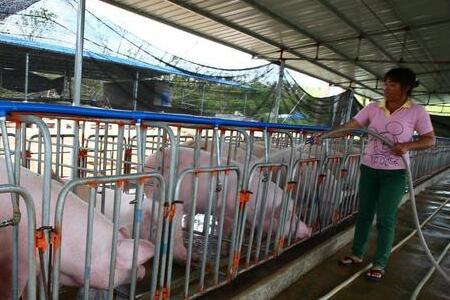 养猪风险大比猪价低还可怕,本文值得养殖户好好看看!