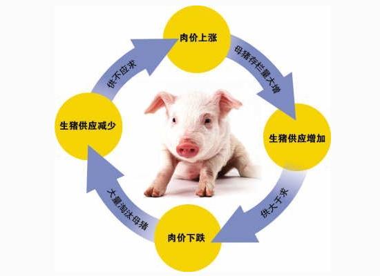 明年养猪全行业 将逼近盈亏平衡线