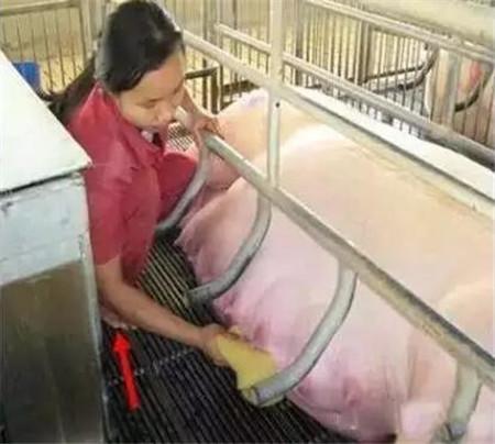 环保税来了,农村养猪散户别慌!