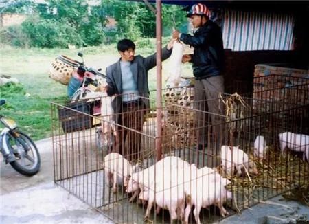 是否有适合农村自繁自养的免疫程序?