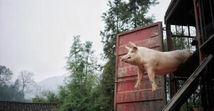 猪价全线反弹上涨跨入14元,养猪人开始赚钱了吗