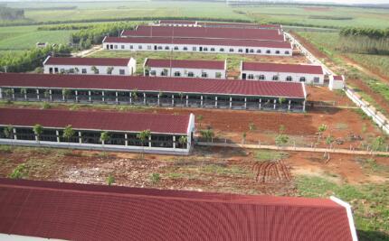 随着养殖业要求的越来越高,养猪人怎么办才能赚到钱!