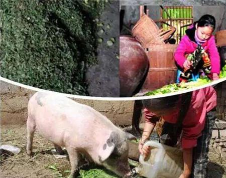 养猪这件事在农村90年代非常常见的,现在也还有不少,但多余家庭型的为主了,大多不成规模,赚钱要看行情、猪周期。