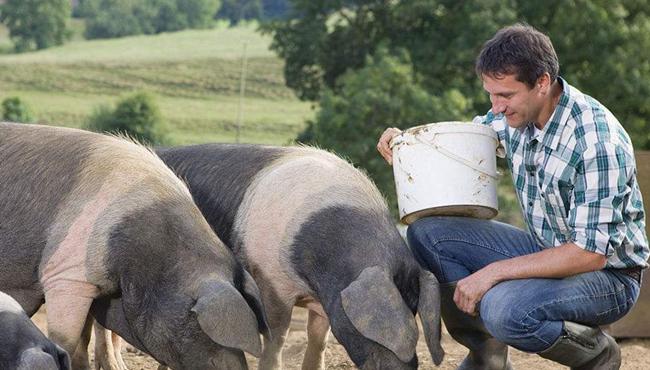 猪价虽涨,养猪户想要全面飘红还要关注这三点!