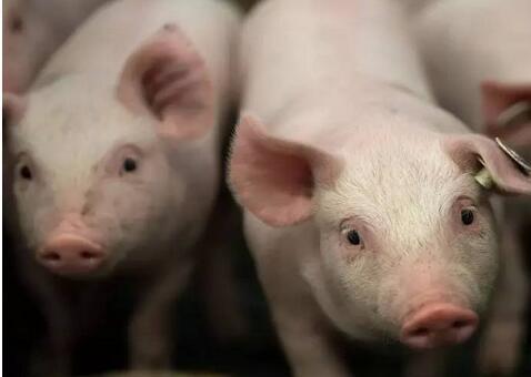 2017『猪场之旅』盛典,重庆西农大科信动物药业有限公司强势助力