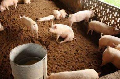 猪价10月将维持在14.1-14.3元 11月或现新希望