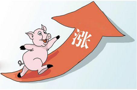 江西生猪价连涨3月,头均利润环比升139.21%