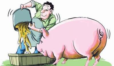 近期生猪价格走势乐观!机构分析:猪价年底或起飞