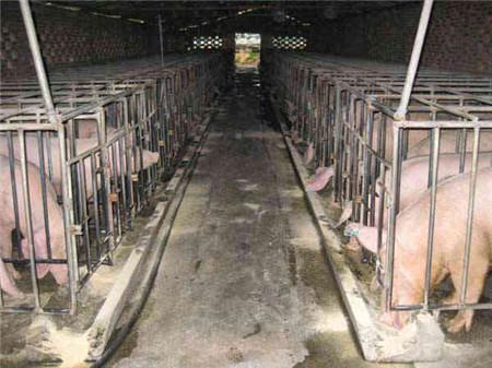 农村小型养猪场该如何设计?这四种方案最适合