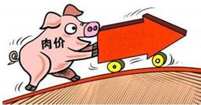 11月份,对于养猪人和屠宰场而言都是一个难熬的季节,毕竟现在生猪行情走势涨跌调整难以企稳,供需博弈非常激烈