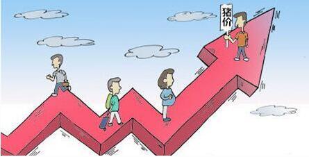 11月中下旬猪价是涨势跌,行内众说纷纭?