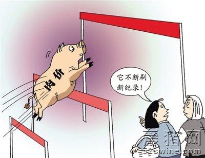 猪价暂未出现涨势 气温回落 还需做好猪场保温工作