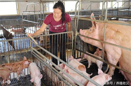 未来养猪,养猪人想赚钱,一定要靠科学合理的饲养管理和对市场行情的一定分析。养猪养赚钱上述的你做好了吗?