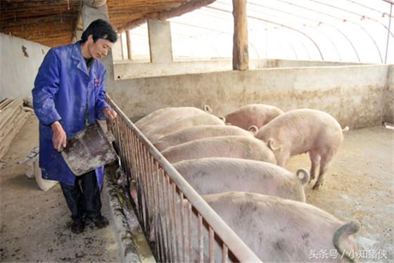 甲酸钙增肥 在仔猪断奶后头几周饲料中添1.5克甲酸钙,可使仔猪的生长速度提高12%以上,饲料转化率提高4%,并能减少仔猪的发病率。