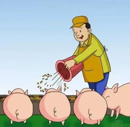 如何掌握科学的喂料方式,小猪长不长膘它是关键