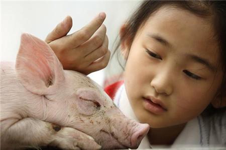 林可霉素在治疗猪病中的这些妙用,用对了就会显奇效!