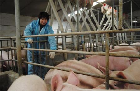 为什么补贴都给了大养猪场?原来是因为……