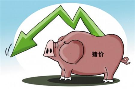 11月猪价将重回8元/公斤吗?还是另有玄机