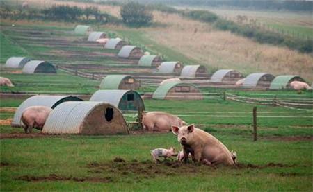 农牧七大巨头前三季度营收1677亿!还敢说养猪不赚钱