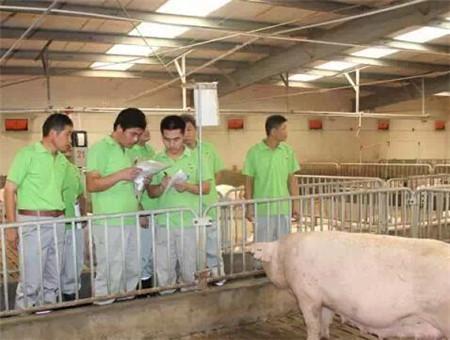 养猪技术快递
