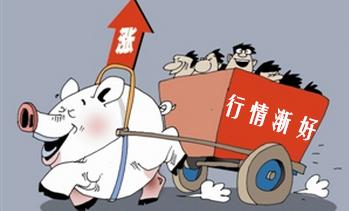 12月猪价上涨两大因素:母猪存栏降、春节出栏体重小!
