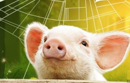 猪价上涨苗头初现!今年或仅剩一波涨价潮