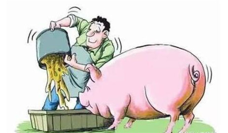 猪吃料少的原因找到了,该如何解决呢?