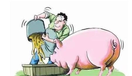 十年前在猪场遇到的育肥案例,帮你解决猪吃料少的问题!
