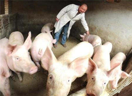 如何减少仔猪应激造成的死亡,农村养猪户有话说
