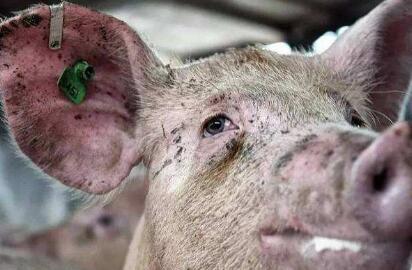"""猪场老板的钱""""不能收"""" 崇义县农粮局三名干部获刑"""