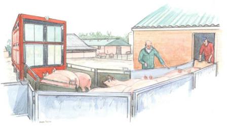 猪只长途运输过程中需要注意的几个问题