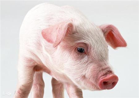 下半年最强冷空气来袭 或为猪价带来利好刺激