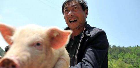 如今7元反复震荡的猪价 春节之前将何去何从?