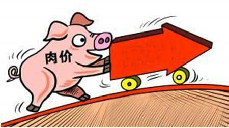 养猪户别怕!生猪价格还有很多上涨空间