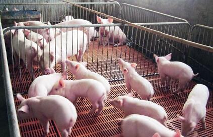 猪价行情低迷,我有4万存款,用来养猪明年能赚钱吗?