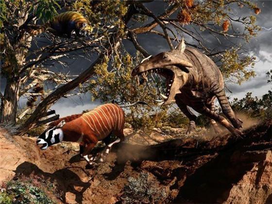 """生活在古近纪,大约距今6500万年,长相并不是巨大的猪,而是在较短的时间内体型发展到野牛这么大,故有""""巨猪""""之称。它们出现于始新世中期,在渐新世时繁荣一时,便在中新世绝灭了。虽然体型庞大,但比起其他蹄类,巨猪的劣势是脑量显然小很多,脑子的体积居然和一只橘子差不多。"""