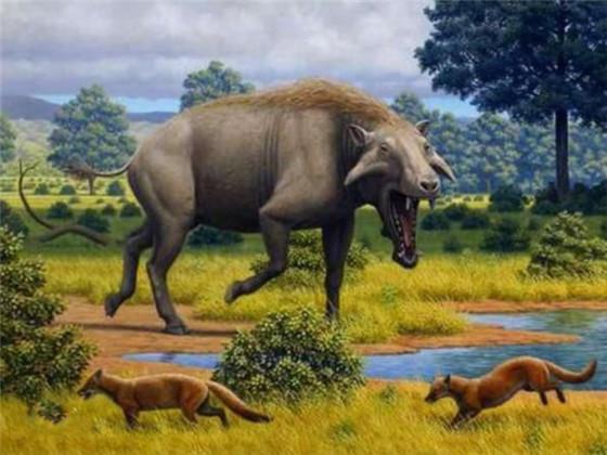 古巨猪 化石主要发现在美国北达科他州、南达科他州、内布拉斯加州及怀俄明州。最早由美国古生物学家约瑟夫·莱迪(Joseph Leidy)于1850年描述,至今共发现了8个种类,它们是完齿猪及其他有蹄类的亲属。