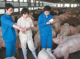 未来10年,想把养猪事业做大,这些问题您必须考虑