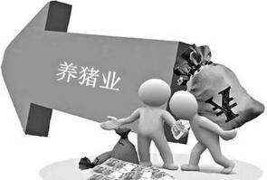 十九大报告引领中国养猪业,看好未来养猪业!