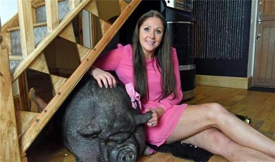 女子养2头300斤的猪,会撒娇卖萌,女子爱得不行,睡觉都要一起