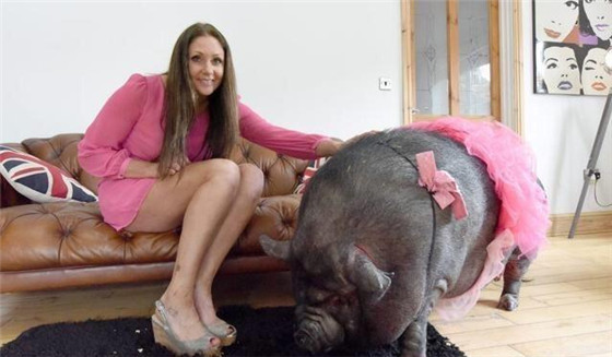 两头猪非常会讨女子欢心,整天撒娇卖萌,深得女子喜爱,现在她不仅没有送它们走的念头,反而越来越喜欢它们。
