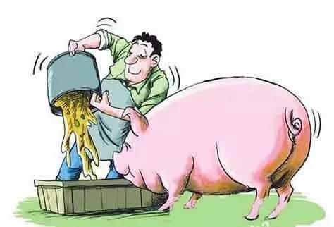 2018年养猪五大要素需注意,赚钱路上别被落下