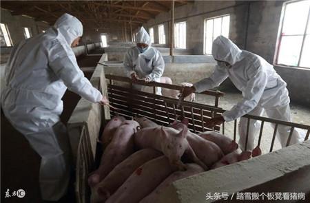 猪场里面这3个问题,养猪人应该知道,减少损失