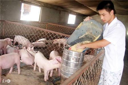 """都说养猪是""""刀口舔血""""的行当,养猪最怕什么?"""